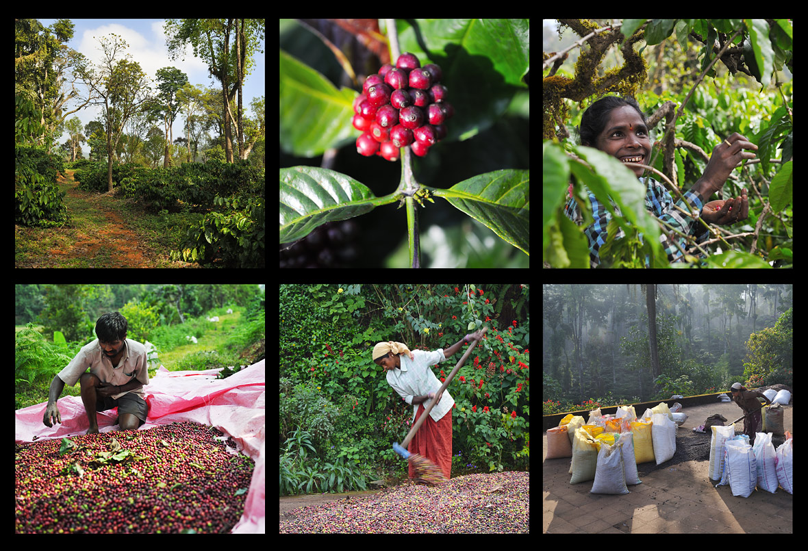Top 10 Major Coffee and Tea Plantation Regions in India